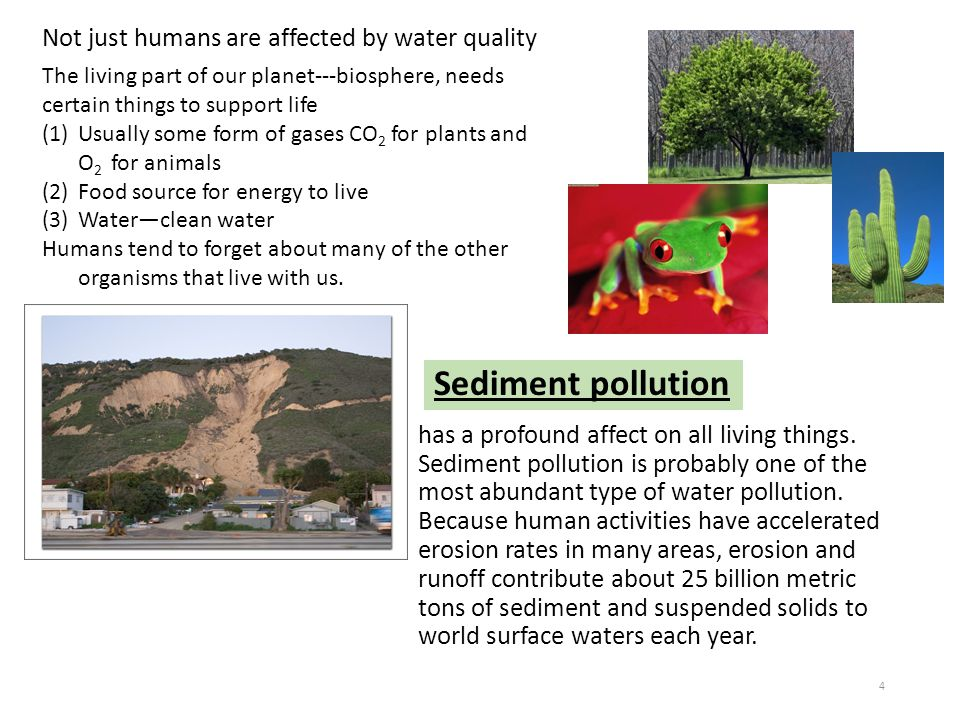 Sediment pollution Not just humans are affected by water quality