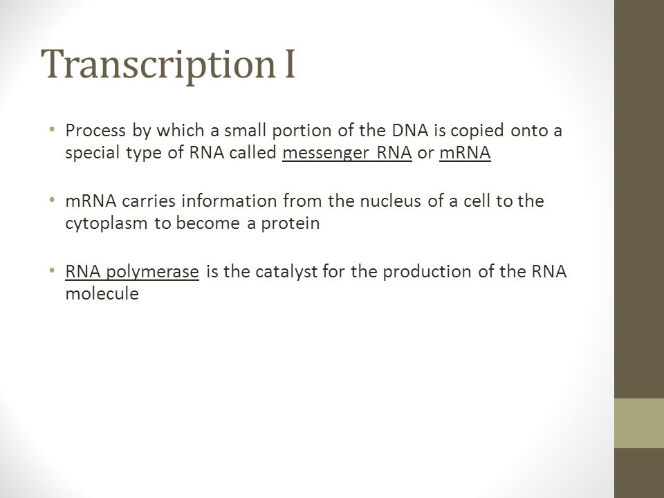 Transcription I Process by which a small portion of the DNA is copied onto a special type of RNA called messenger RNA or mRNA.