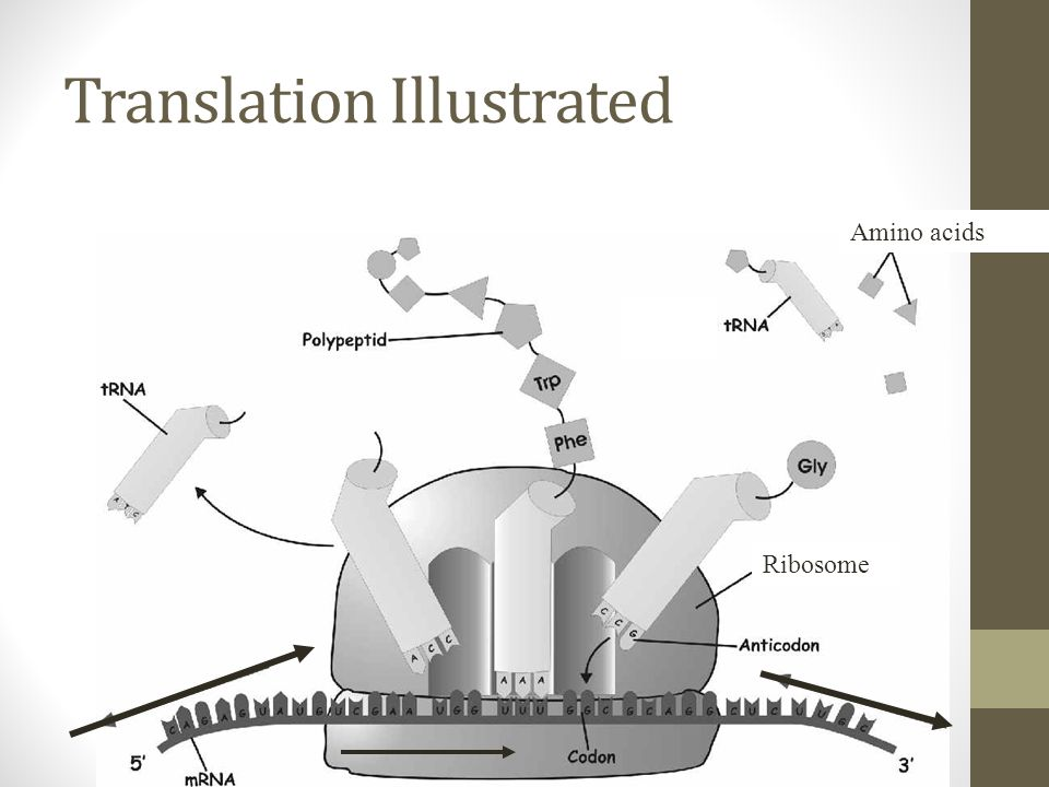 Translation Illustrated