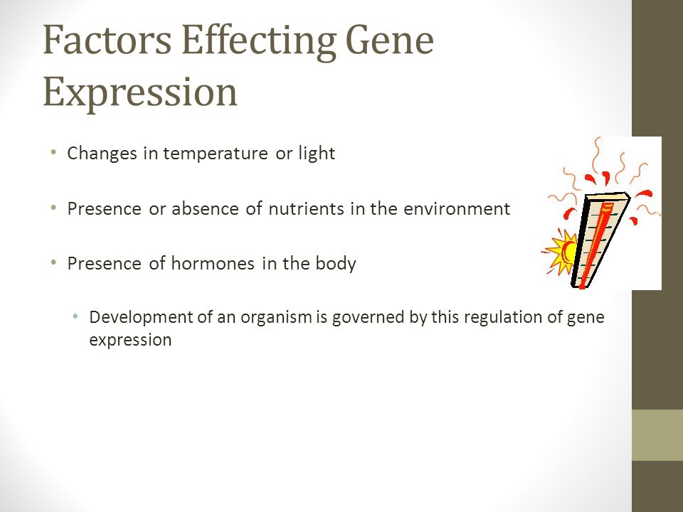 Factors Effecting Gene Expression