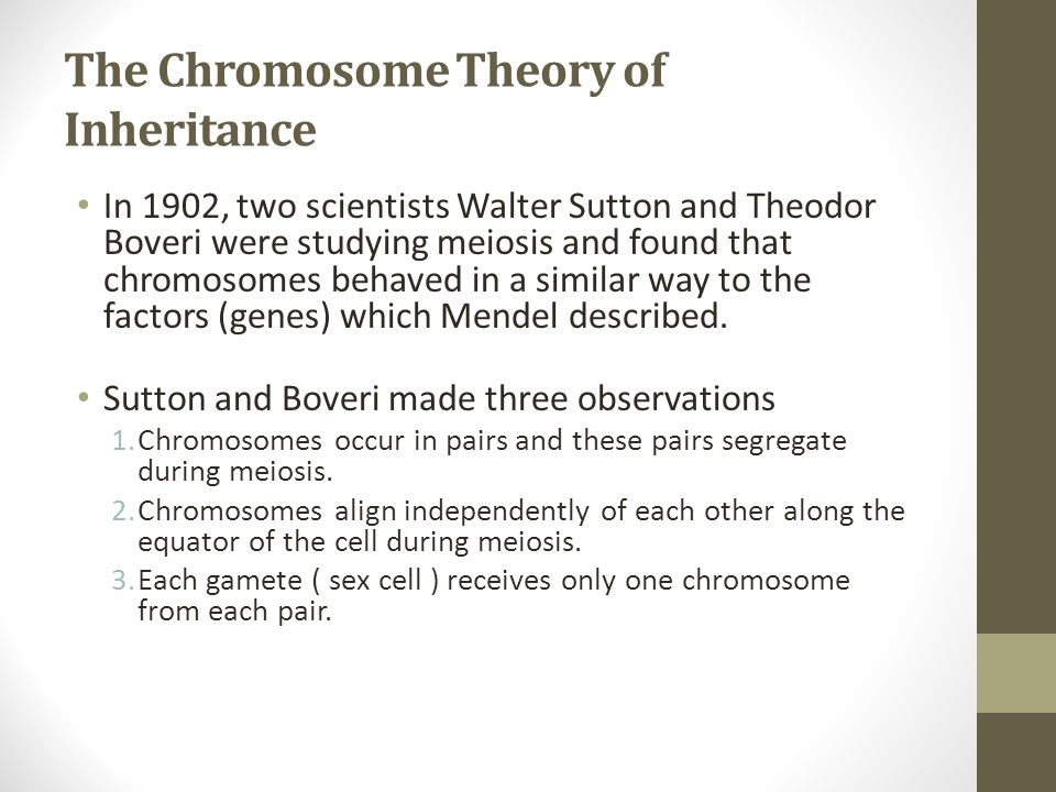 The Chromosome Theory of Inheritance