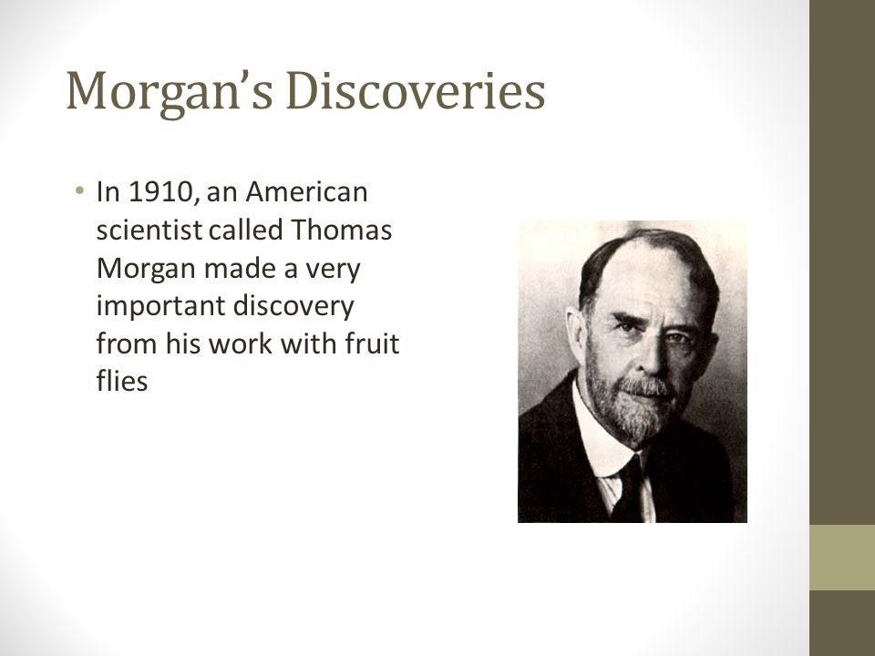 Morgan's Discoveries In 1910, an American scientist called Thomas Morgan made a very important discovery from his work with fruit flies.