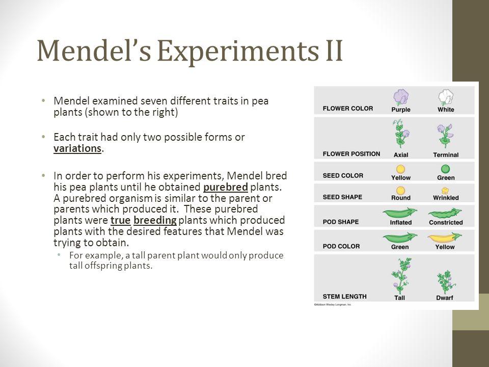 Mendel's Experiments II