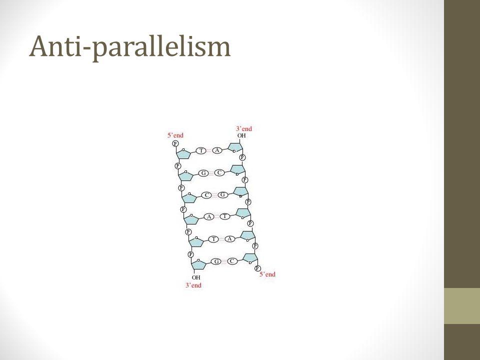 Anti-parallelism