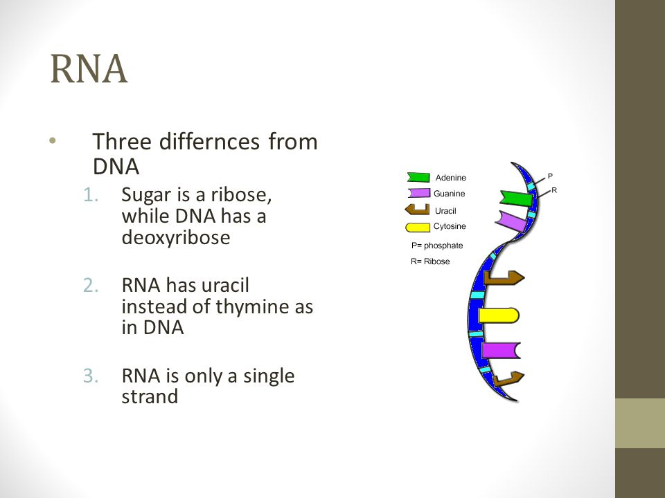 RNA Three differnces from DNA