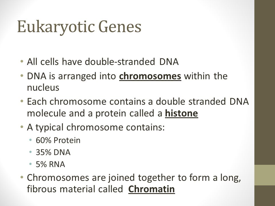 Eukaryotic Genes All cells have double-stranded DNA