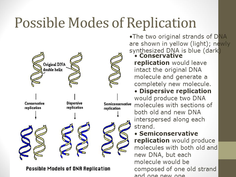 Possible Modes of Replication