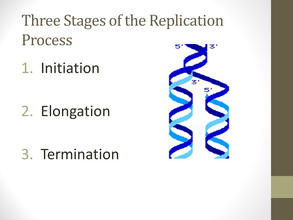 Three Stages of the Replication Process