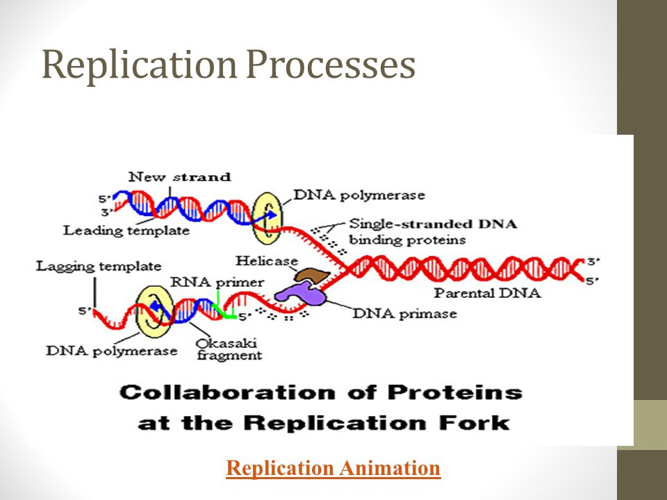 Replication Processes