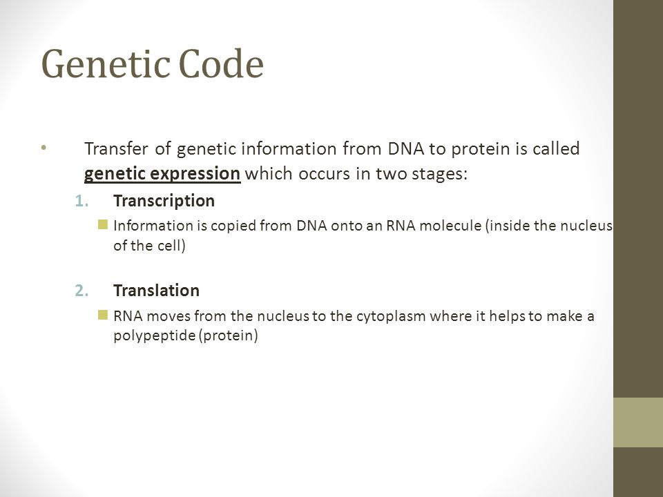Genetic Code Transfer of genetic information from DNA to protein is called genetic expression which occurs in two stages:
