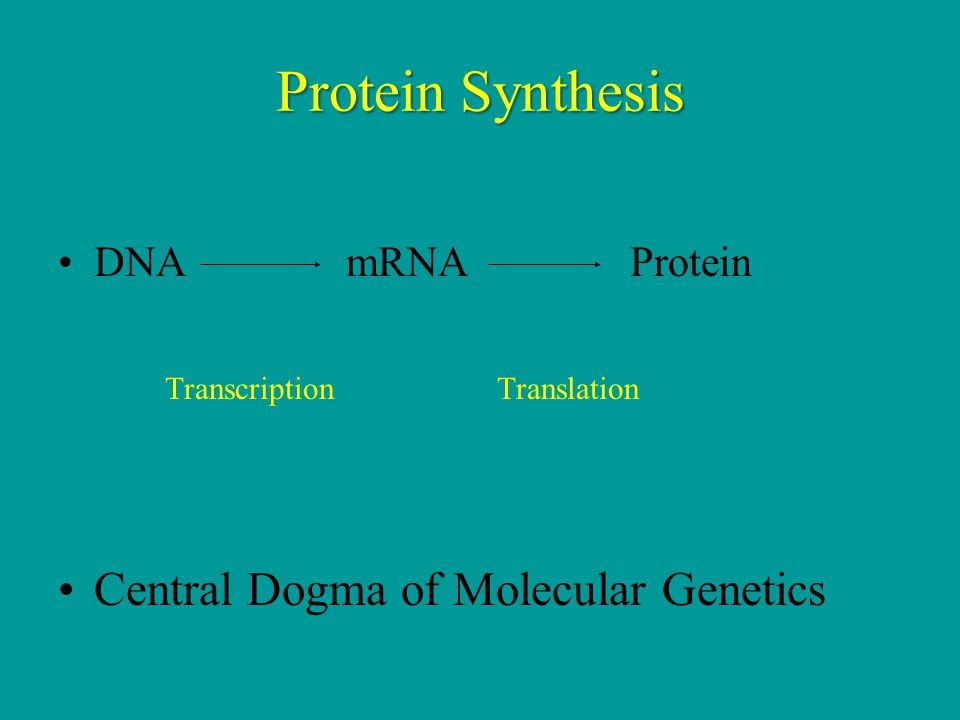Protein Synthesis Central Dogma of Molecular Genetics DNA mRNA Protein