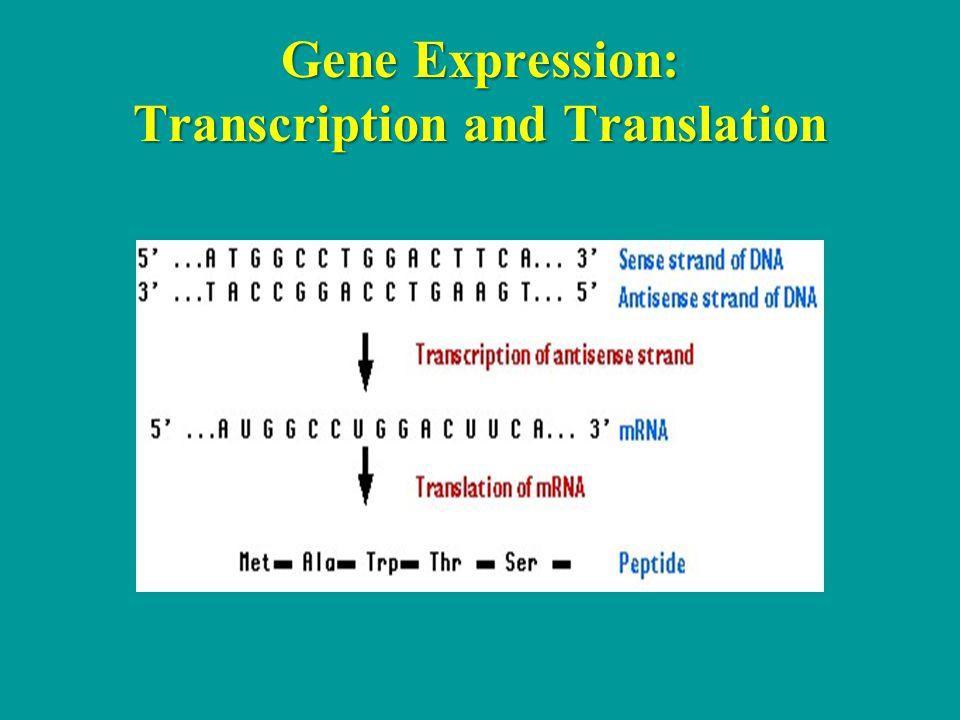 Gene Expression: Transcription and Translation