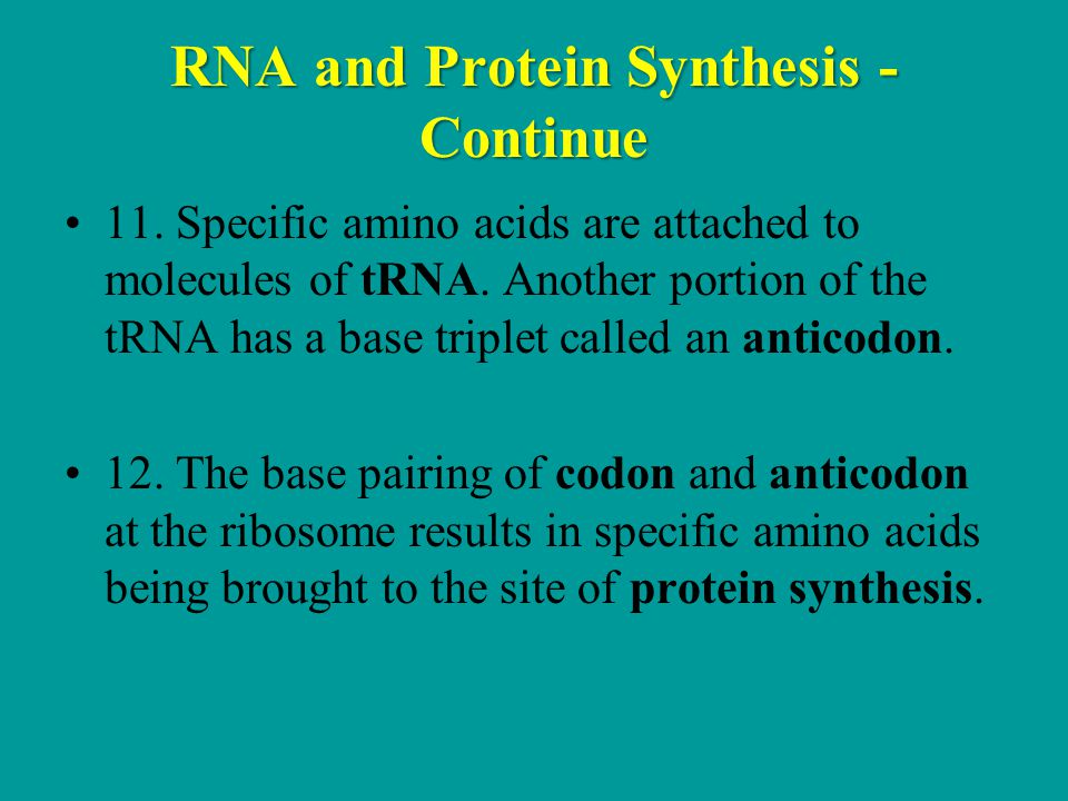 RNA and Protein Synthesis - Continue