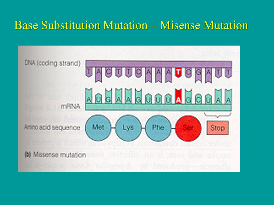 Base Substitution Mutation – Misense Mutation