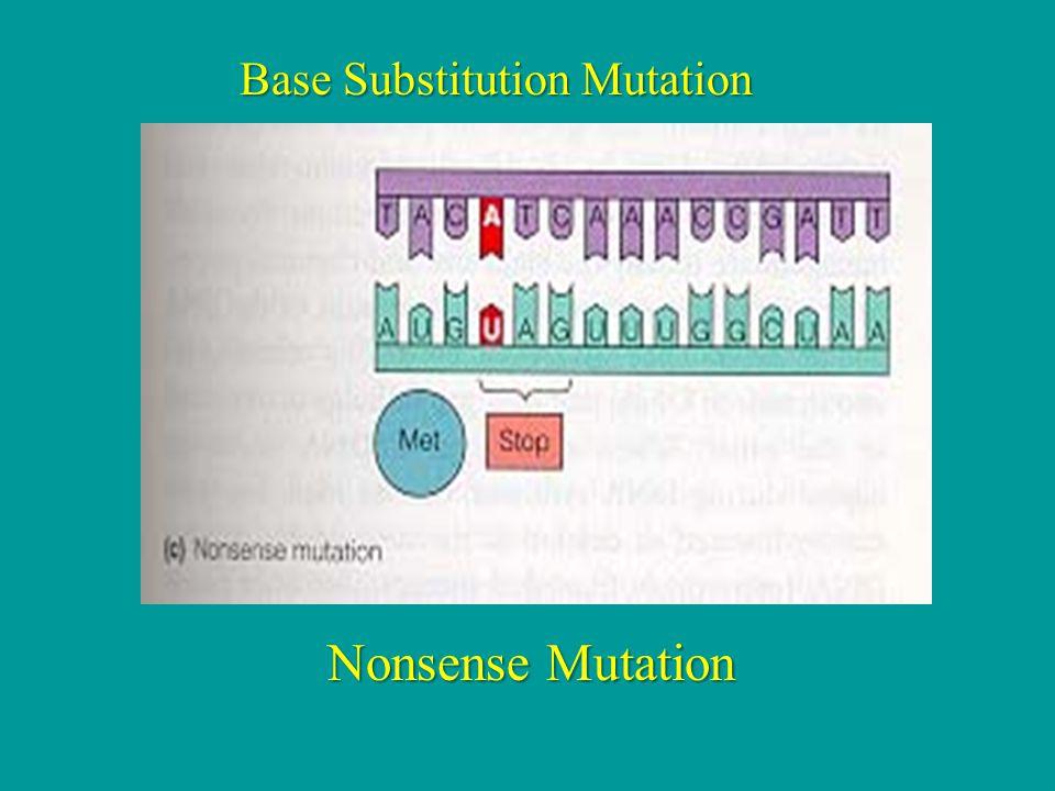 Base Substitution Mutation