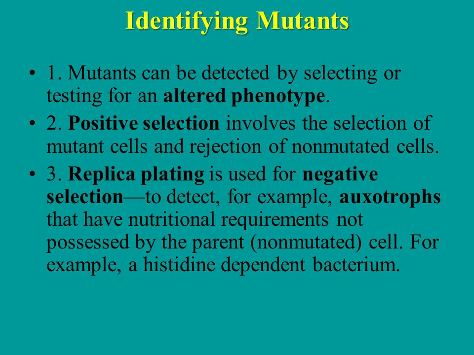 Identifying Mutants 1. Mutants can be detected by selecting or testing for an altered phenotype.