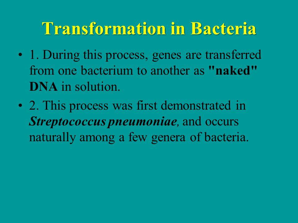 Transformation in Bacteria