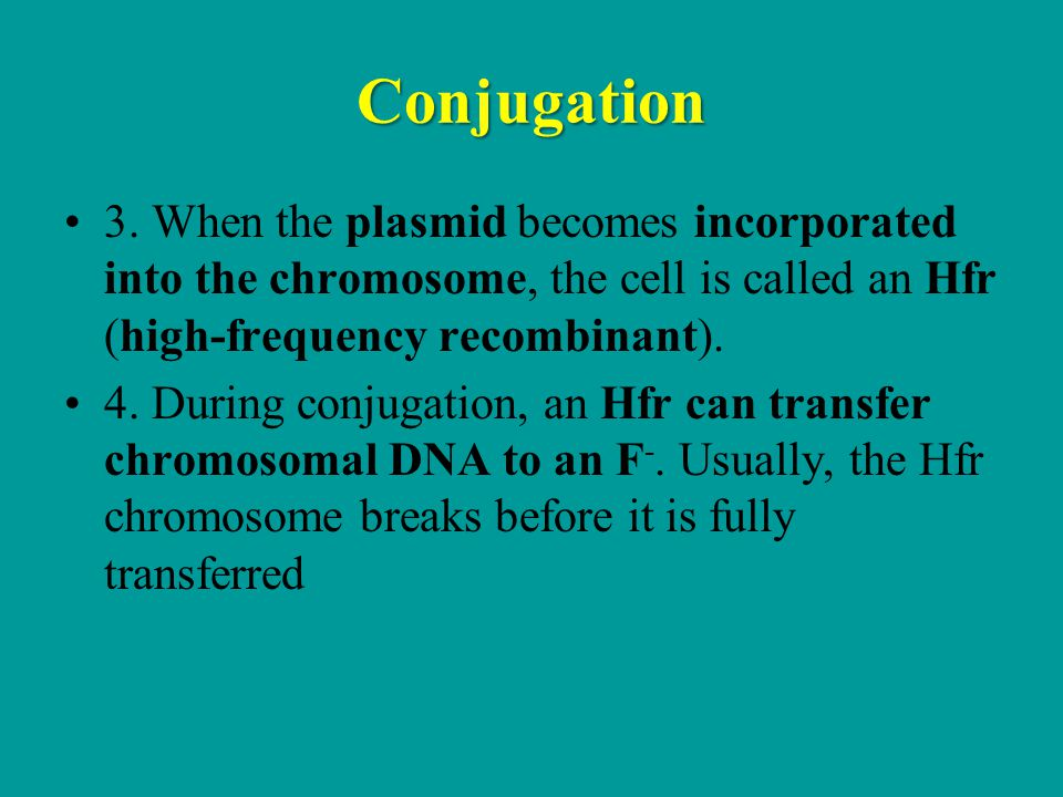 Conjugation 3. When the plasmid becomes incorporated into the chromosome, the cell is called an Hfr (high-frequency recombinant).