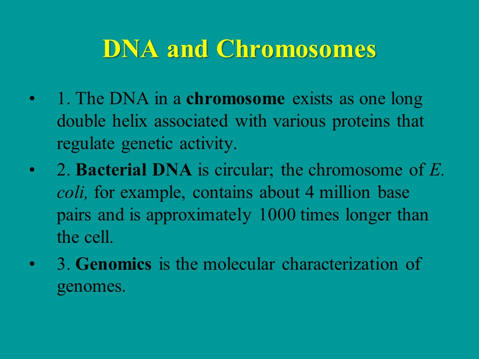 DNA and Chromosomes 1. The DNA in a chromosome exists as one long double helix associated with various proteins that regulate genetic activity.