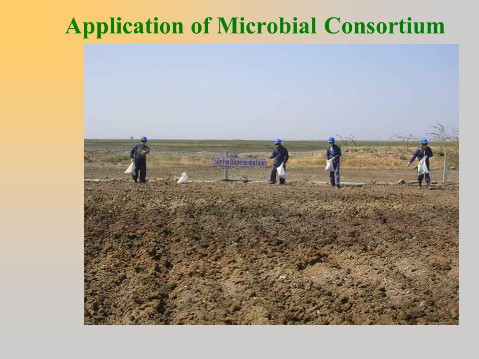 Application of Microbial Consortium