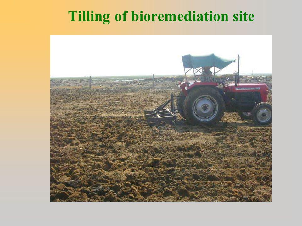 Tilling of bioremediation site