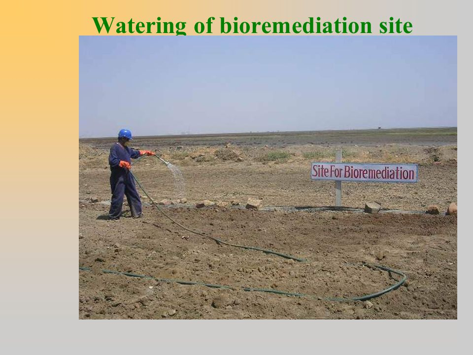 Watering of bioremediation site