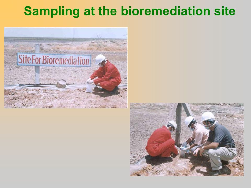 Sampling at the bioremediation site