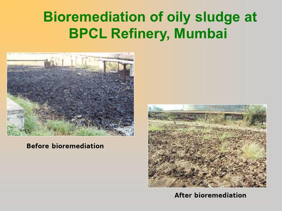 Bioremediation of oily sludge at BPCL Refinery, Mumbai
