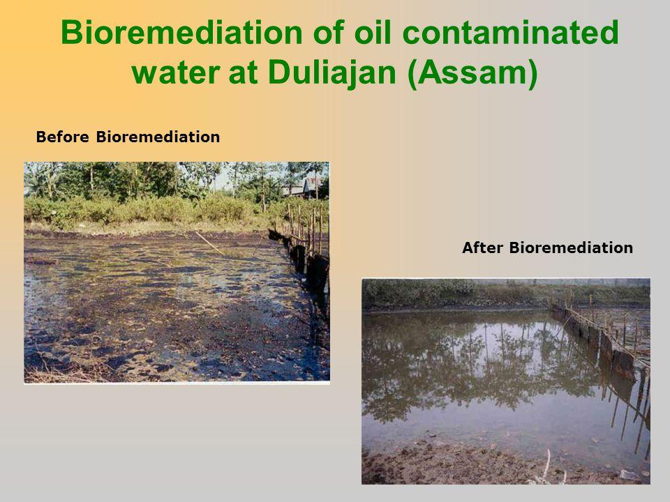 Bioremediation of oil contaminated water at Duliajan (Assam)