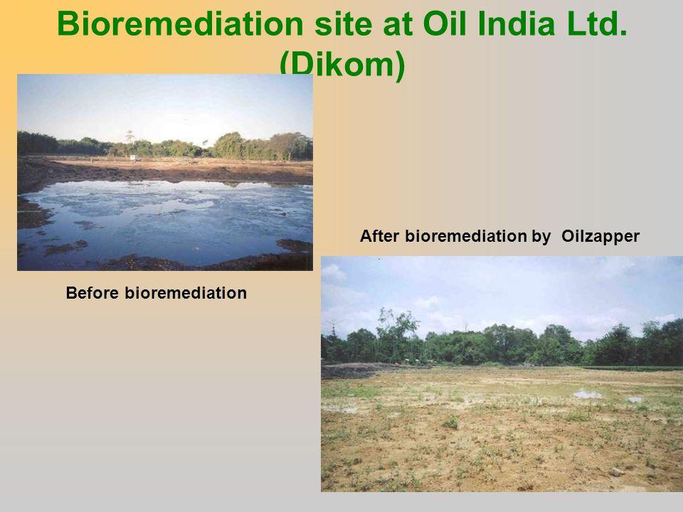 Bioremediation site at Oil India Ltd. (Dikom)