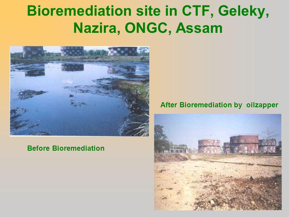Bioremediation site in CTF, Geleky, Nazira, ONGC, Assam