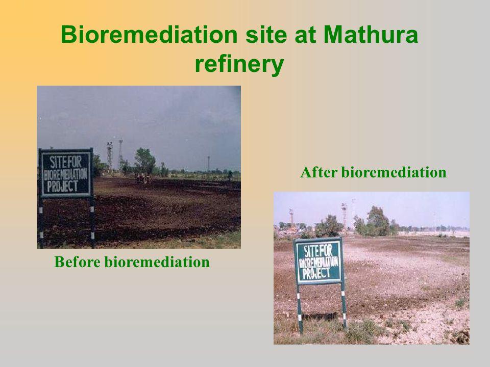 Bioremediation site at Mathura refinery