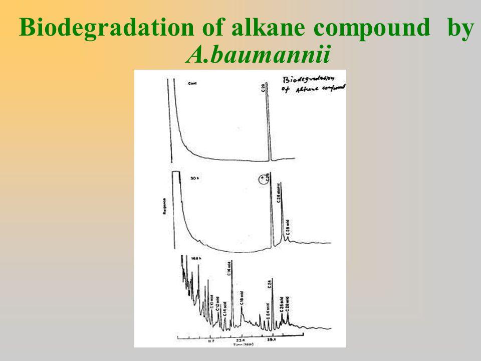 Biodegradation of alkane compound by A.baumannii