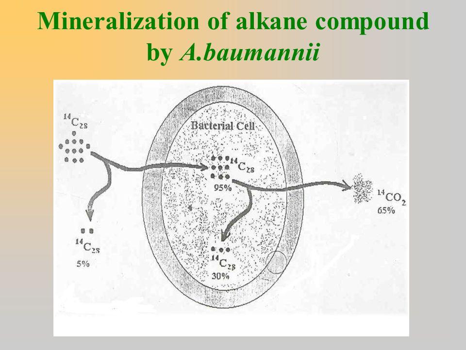 Mineralization of alkane compound by A.baumannii
