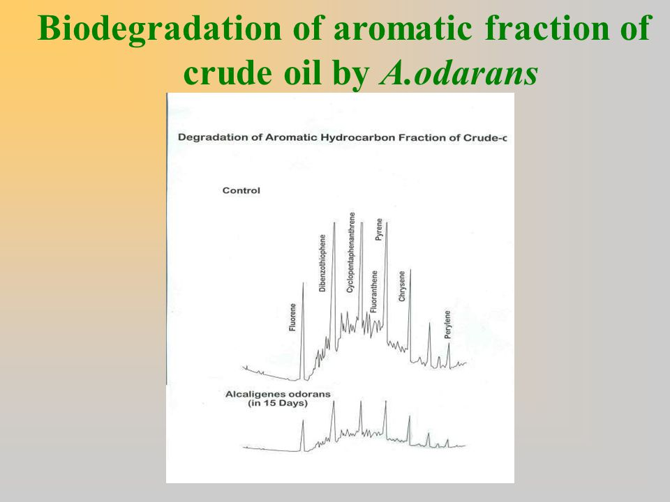 Biodegradation of aromatic fraction of crude oil by A.odarans