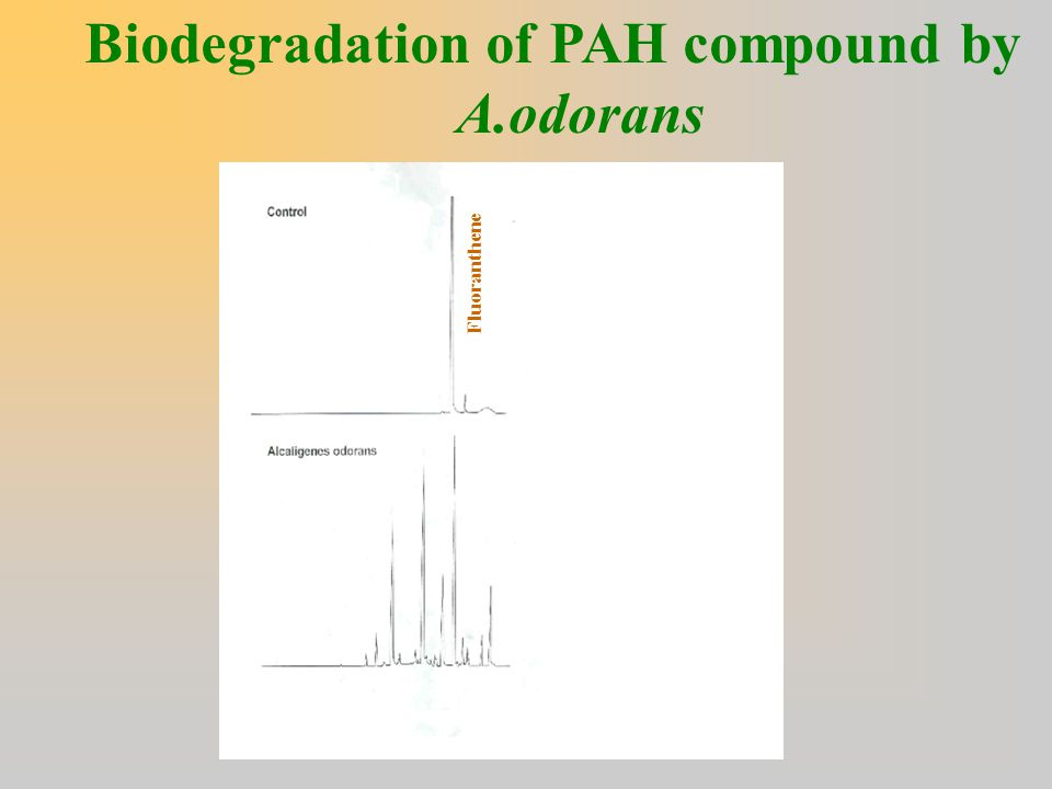 Biodegradation of PAH compound by A.odorans