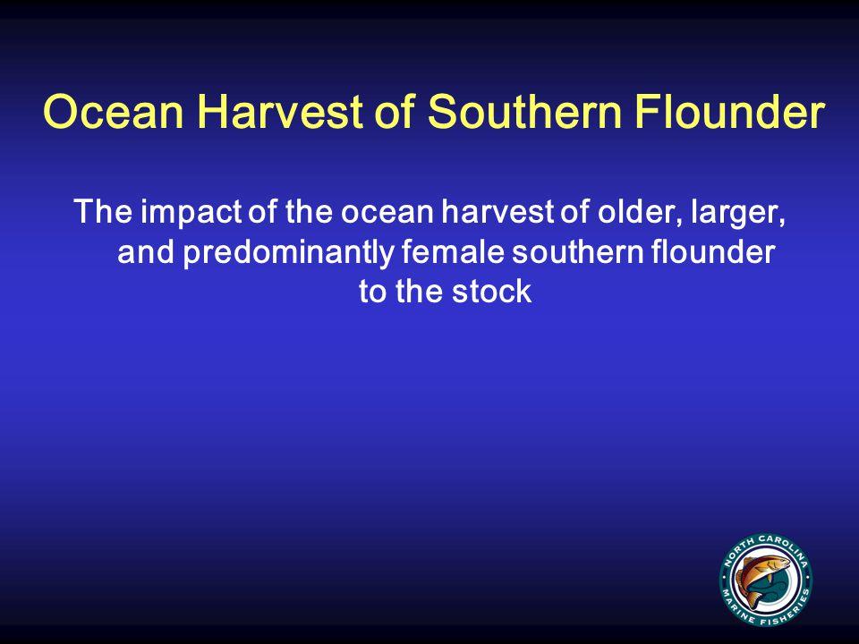 Ocean Harvest of Southern Flounder