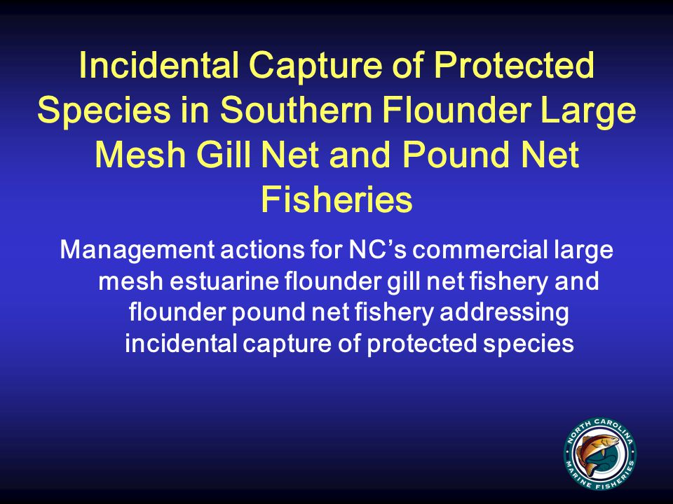 Incidental Capture of Protected Species in Southern Flounder Large Mesh Gill Net and Pound Net Fisheries