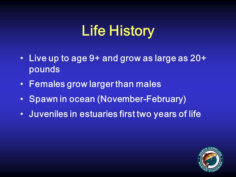 Life History Live up to age 9+ and grow as large as 20+ pounds