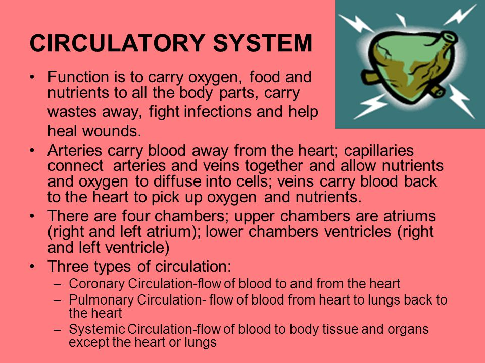 CIRCULATORY SYSTEM Function is to carry oxygen, food and nutrients to all the body parts, carry.