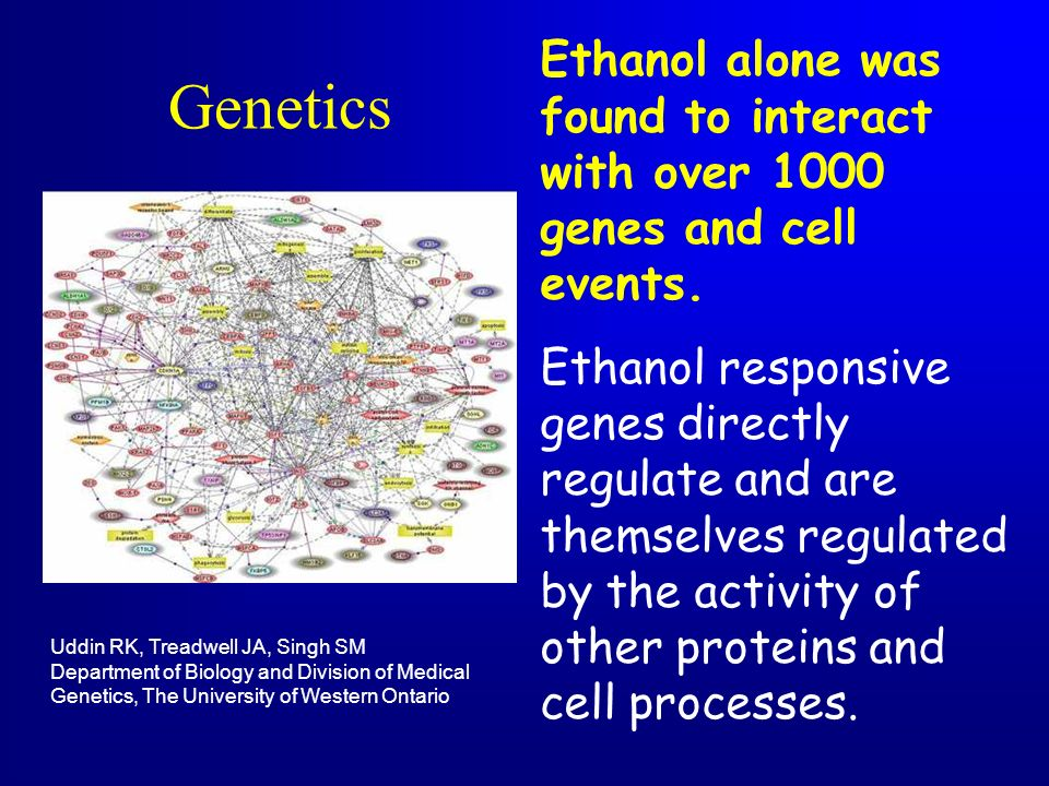 Ethanol alone was found to interact with over 1000 genes and cell events.