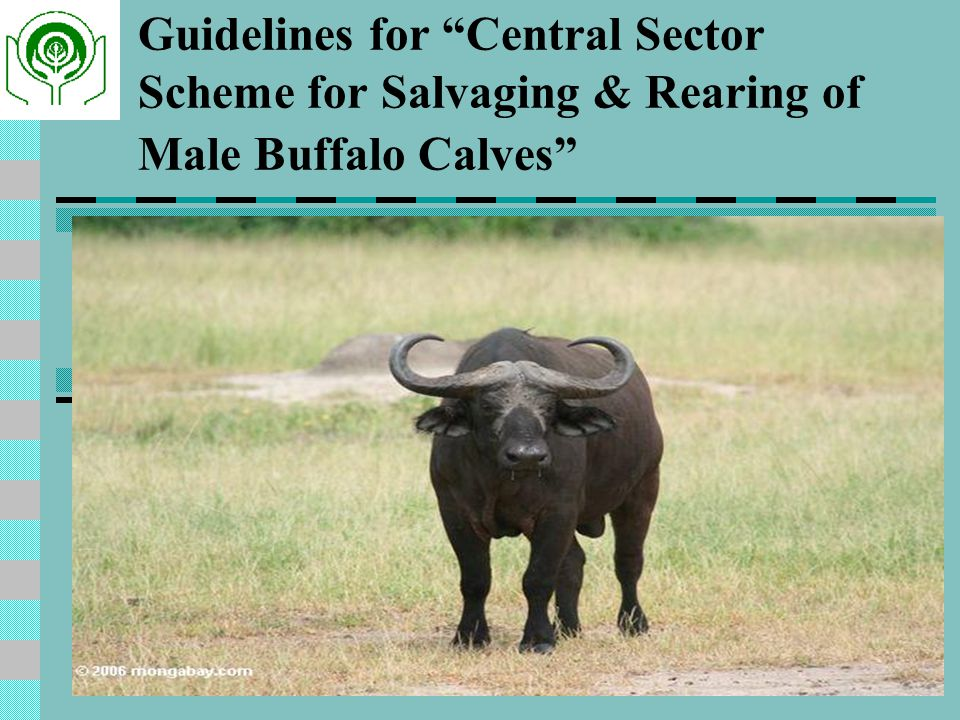 Guidelines for Central Sector Scheme for Salvaging & Rearing of Male Buffalo Calves