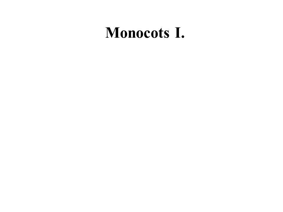 Monocots I.