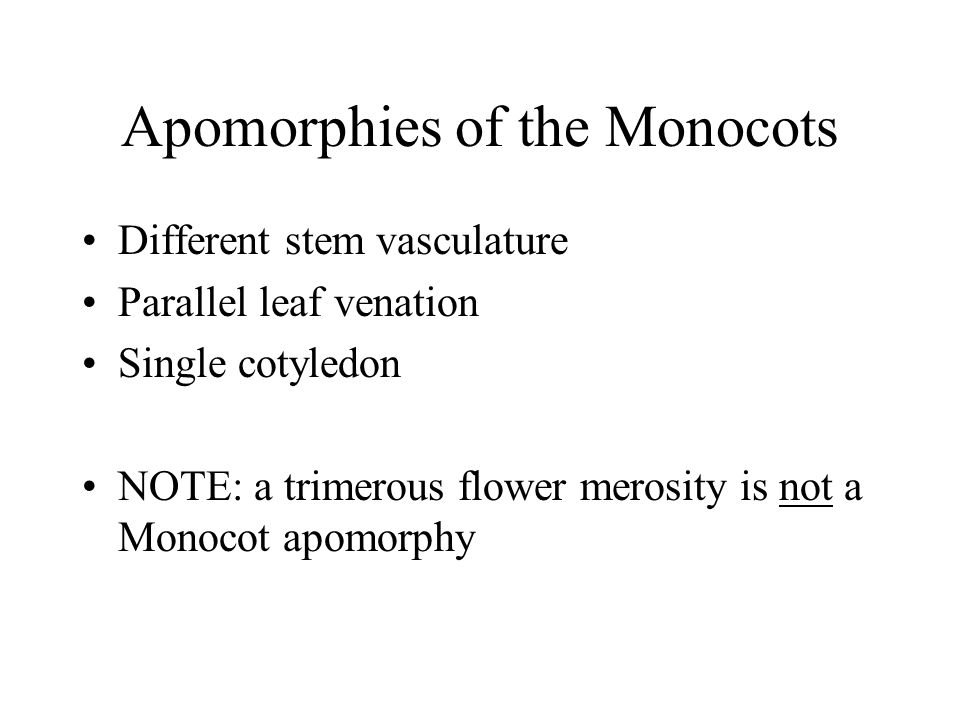Apomorphies of the Monocots