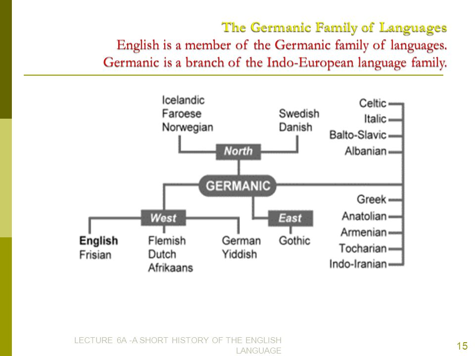 The Germanic Family of Languages English is a member of the Germanic family of languages. Germanic is a branch of the Indo-European language family.