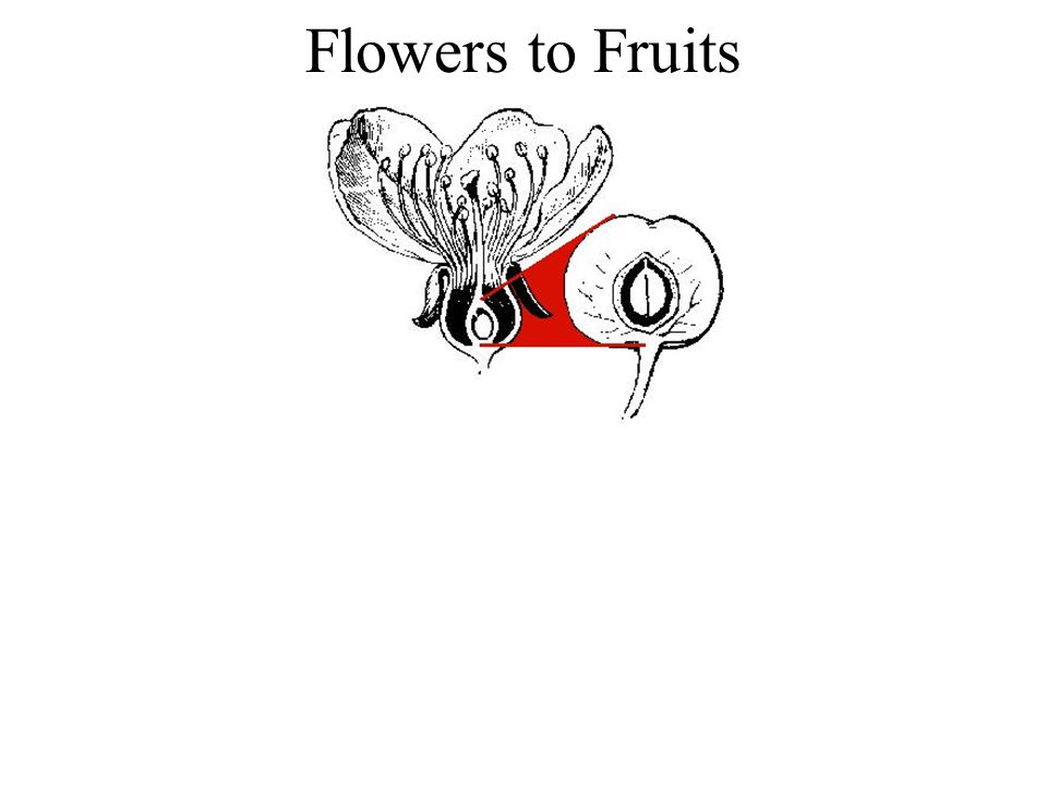 Flowers to Fruits