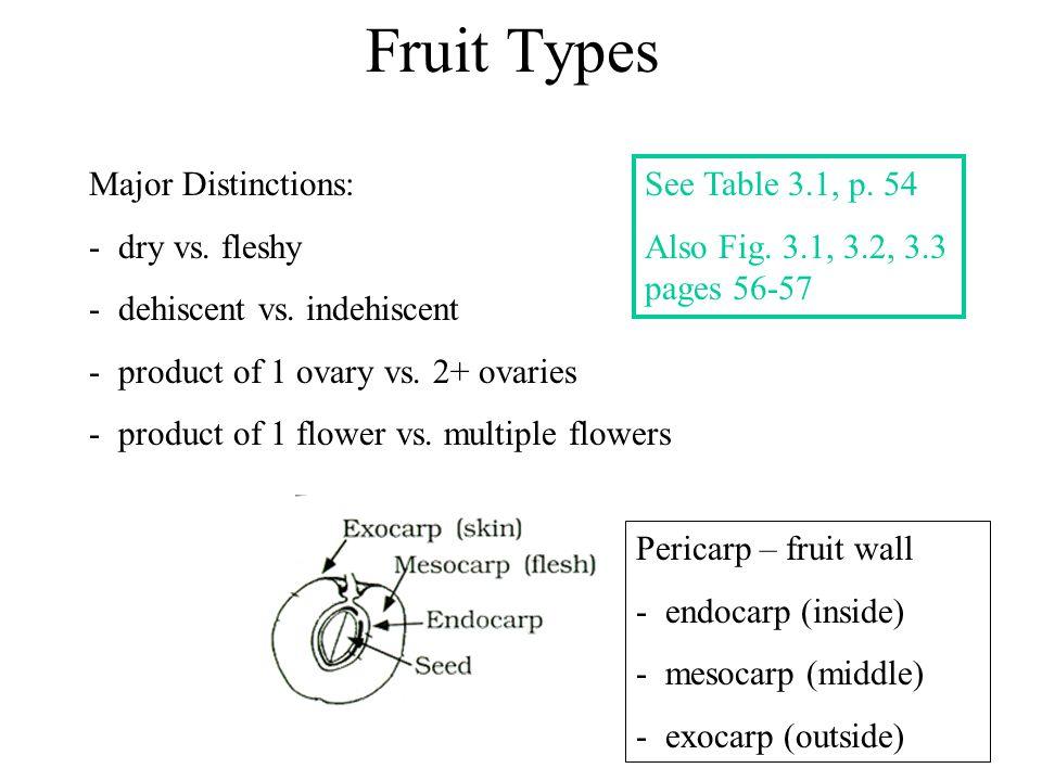 Fruit Types Major Distinctions: dry vs. fleshy