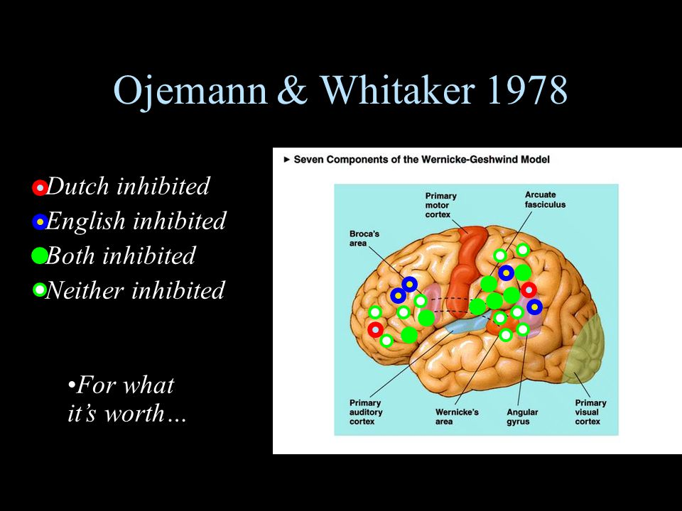 Ojemann & Whitaker 1978 Dutch inhibited English inhibited