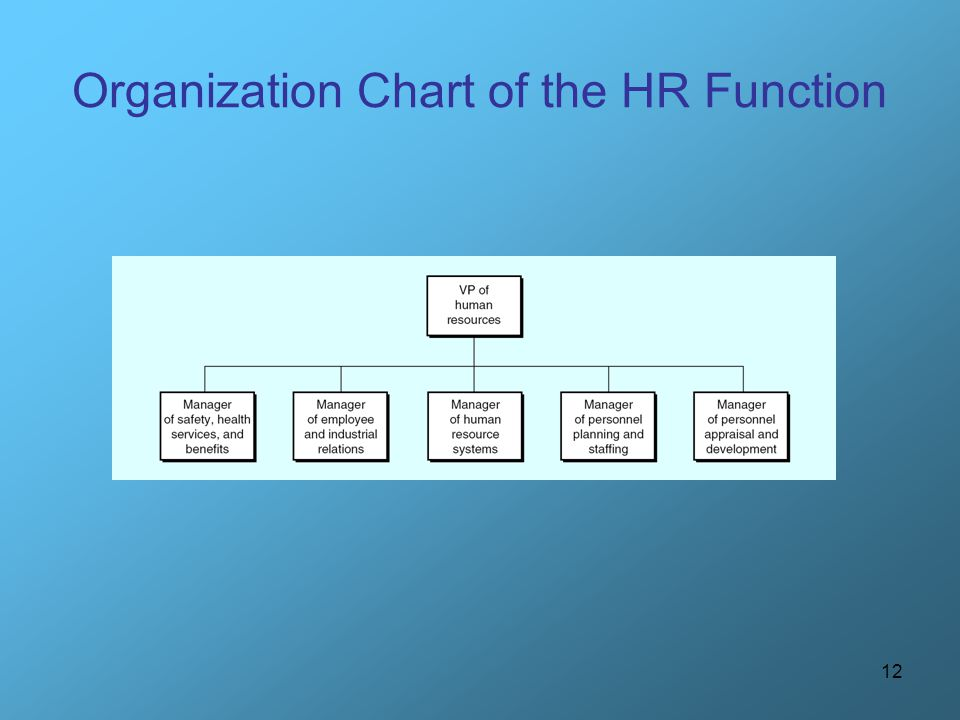 Organization Chart of the HR Function