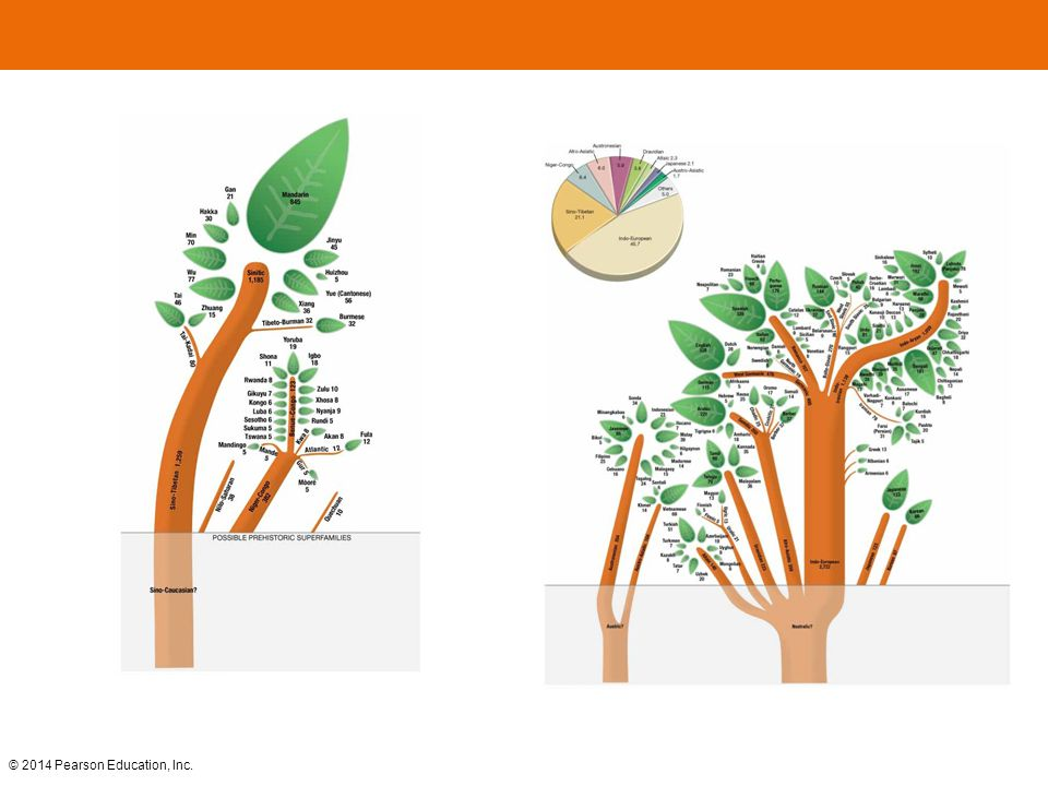 FIGURE 5-3 LANGUAGE FAMILY TREE Language families with at least 10 million speakers according to Ethnologue are shown as trunks of trees. Some language families are divided into branches and groups. Individual languages that have more than 5 million speakers are shown as leaves. Below ground level, the language tree's roots are shown, but these are speculative because they predated recorded history.